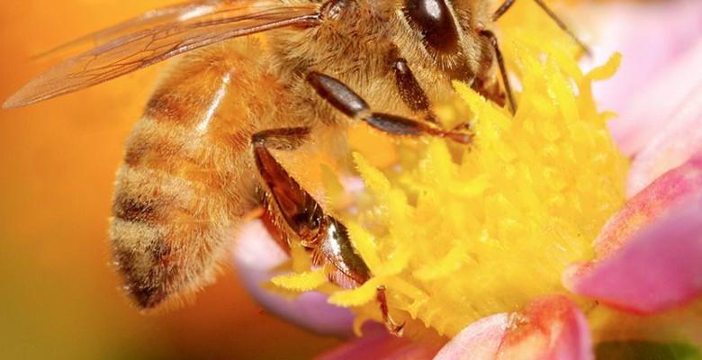 Aide à la transhumance pour les apiculteurs professionnels