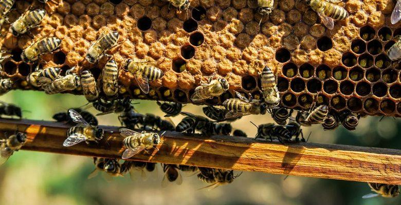 Apiculture urbaine : conseils pour réussir la récolte de miel en entreprise